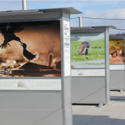 De `Wild Wonders of Europe´ aan de Hauptbahnhof